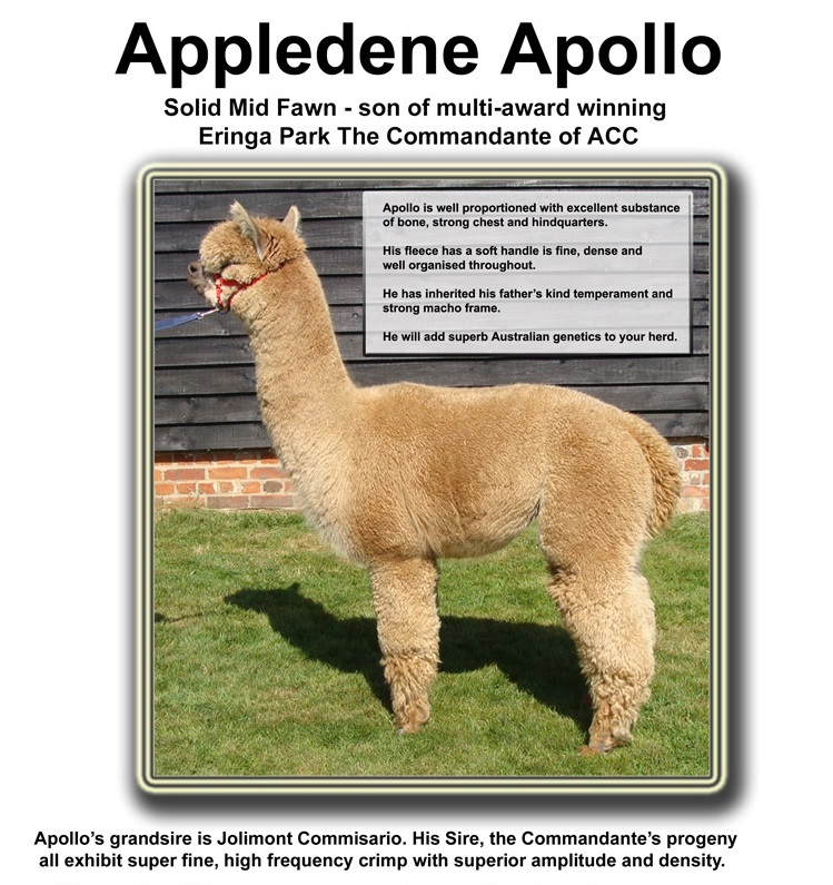 appledene-apollo-stud-sheet-top-part